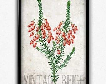 Heather Flowers Botanical Vintage Print - Vintage Botanical Home Decor - Vintage Botanical Poster - Flower Art - Living Room Art