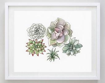 Succulents  2 Watercolor Art Print