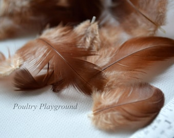 RED chicken feather 2 inches and under breast etc appx 40ct