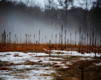 Photography, fog, mist, reeds, cattails, gray skies, orange, gray, snow, winter, fine art