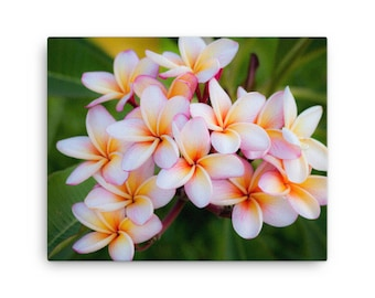 Plumeria Blossom photo on Canvas, Floral photography Canvas, Floral Home Decor, Flower Photography, Israel Photography, Sea of Galilee Photo