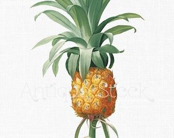 Ananás Clipart 'Pineapple' Botanical Illustration Digital Download Image for Wall Art Prints, Scrapbooking, Collages, DIY Crafts...