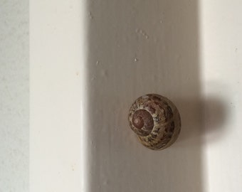 Magnetic Snail Shell Disguised Geocache