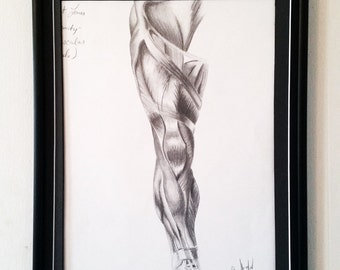 Original Artwork Muscular Study in Charcoal - Gift - Art - New Year