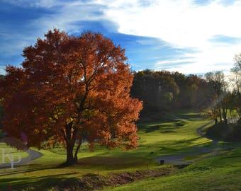 "Photo Print -- ""Secret Golf Tree"""