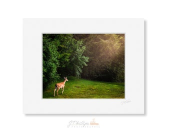 Deer in Morning Light