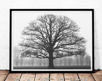 Grand Oak Tree Print, Black and White Photography, Black and White Oak Tree,  Modern Home Decor,  Fine Art Print, Forest Photography Print