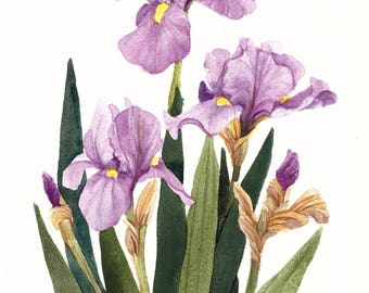 Iris Group Watercolor Painting Reproduction by Wanda's Watercolors