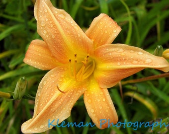 Orange Lily in Guatemala Greeting Card