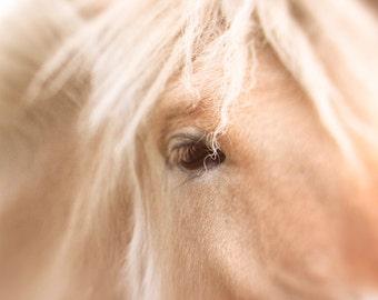 Animal photography, Magic Mystical Horse eye close up print photograph