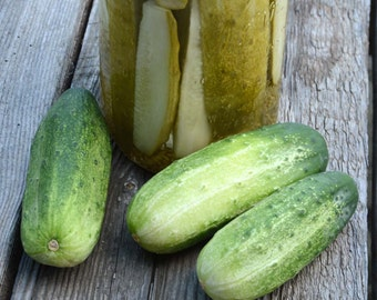 Cucumber Seeds, Pickling Cucumbers, Heirloom Vegetables, Homemade Pickles, Non GMO Seeds, Grow Your Own Organic Cucumbers, Great for Pickles