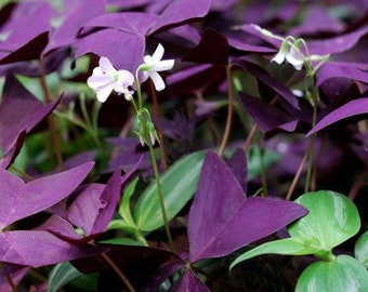 "Specialty Plant / Mijke 4"" Pot RT78-D"