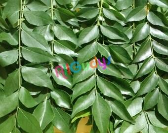 Fresh ORGANIC Indian Curry Leaves (Kari Patta) TEXAS GROWN!!