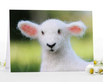 Set of 3 Meadow Lambs Greeting Cards, blank card set, Spring, Birthday or any occasion