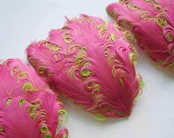 SET OF 5 - Pink on Lime Curled Goose Feather Pads
