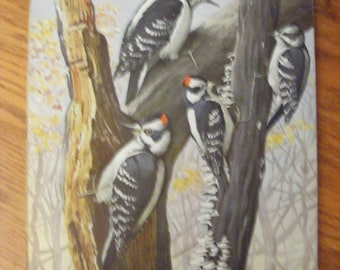 Bird Art Woodpecker Vintage Lithograph Double Sided Bird Print Louis Fuertes Woodpeckers Kingfisher Cuckoo
