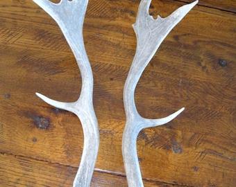 Pair Fallow Deer Antlers