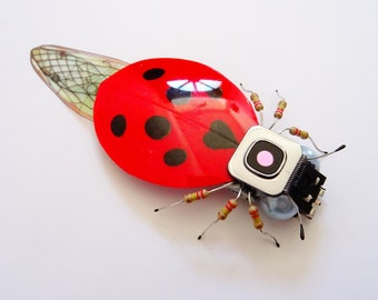 The Seven Spotted Ladybird, Camera Component Insect by Julie Alice Chappell