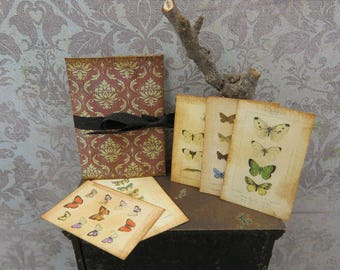 Butterflies zoological plates with folder in 1:12 scale