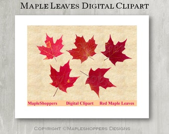 Maple Leaf Clipart Maple Leaves Clipart Digital Leaf PNG Red Maple Leaf Digital Images Realistic Maple Leaf Clipart Graphics Printables