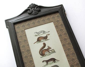Artisan Framed Original c. 1830 Buffon H/C Antique Engraving. Woodland Animals. Naturalist Decor. Framed Art. Home Decor.