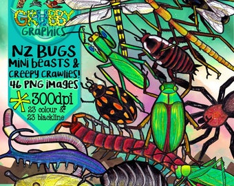New Zealand Native Bugs Clip Art, Insects, Spiders & Invertebrates, Instant Digital Download