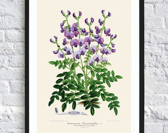 Blue flower print botanical print illustrations blue flowers print vintage antique print wall art print herb art home kitchen decor poster