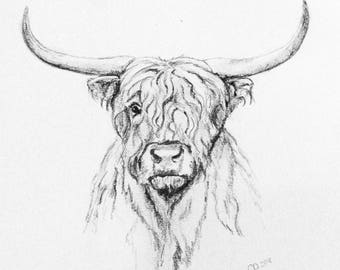 Pencil and Charcoal sketch of highland cow