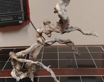 Cottonwood Driftwood Root