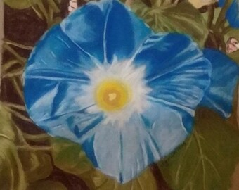 Heavenly Blue Morning Glory, Original Pastel Drawing