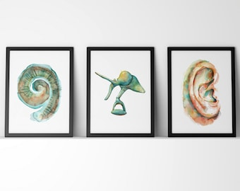 Cochlea, Ossicles and Ear Watercolor Art Print Set