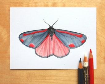 Original Cinnabar Moth Art, A6 Entomology Drawing, Butterfly Artwork, Insect Scientific Illustration
