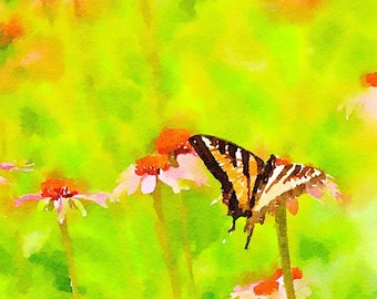 Oregon Swallowtail painted nature photo, watercolor butterfly and echinacea flowers wall decor for home or office