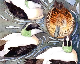 Greeting card: 'Courting eiders', eider duck card, duck card, wildbird card, wildlife card, birthday card, blank card, quality greeting card