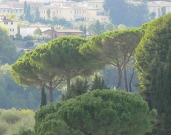Tuscan pines
