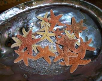 "Tiny Baby Mini Sized Sugar Starfish 1"" 2"" FREE Shipping Create Hair Tiaras Crowns Crafts Frames Beach Wedding Sea Stars DIY Supply Seashells"