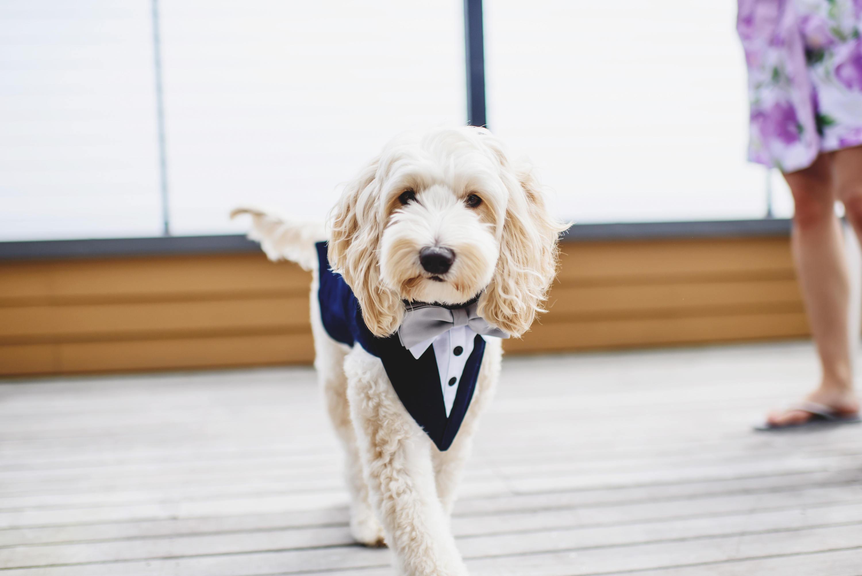 Fantastisch Hund Hochzeit Outfit Bilder - Brautkleider Ideen ...