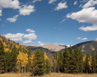 Aspen Trees, Rocky Mountains, Colorado, aspen tree, aspen tree art, rocky mountains, aspen tree photography, fall art, aspen tree wall art