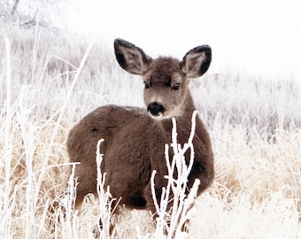 The Fawn on a Hill Animal Photography Fawn in the Hoarfrost