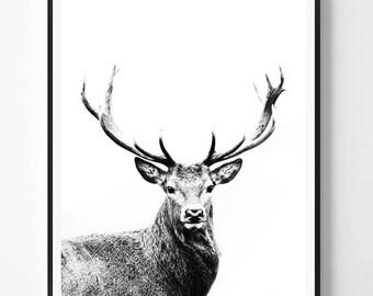 Deer Print, Black and White Photography, Minimal photo, Deer Wall Art, Anima Photo, Minimalist Print, Scandinavian Printable Art, Modern