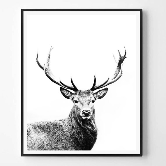 Hirsch-Print schwarz / weiß Fotografie minimale Foto Deer