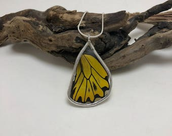Real butterfly, real butterfly jewelry, handmade butterfly jewelry, real butterfly pendant,Real Butterfly Wing Necklace, butterfly