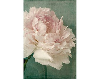 Peony Photograph, Peony Wall Art, Still Life Floral Print, Shabby Chic Wall Decor, French Country Home