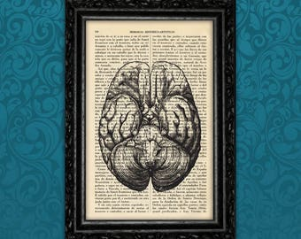 Brain Section Vintage Print Anatomical Print Medical Poster Print Human book art Print Wall Decor Poster Dictionary Retro (Anatomical N4)