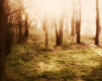 Tree Photography - Wall Art - Sunbeams - Dreamy - Home Decor
