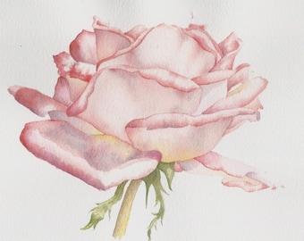 Original watercolour rose painting ~ Soft red rose