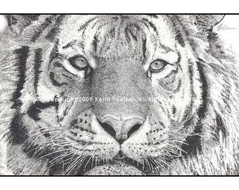 Tiger Pen and Ink Drawing Print Signed by Artist