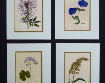 Real Pressed Flowers Pressed Botanical Art Herbarium Collection 8x10