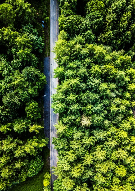 Forest Road Trees Drone Photography Minimalist