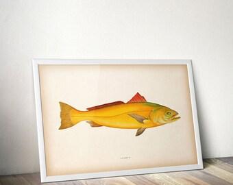 Antique fish print, 8x10 printable, 11x14 printable, Nautical art, Fish wall art print, Fish print vintage, Illustration, Instant download